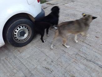 Hundar utsatts for ren tortyr